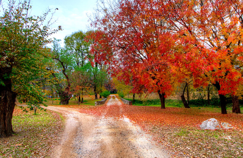 Autumn in the country, leading down a path that takes two courses