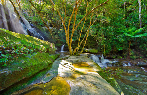 Lush green bushland in the NSW Central Coast is home to Somersby Falls, NSW, Australia