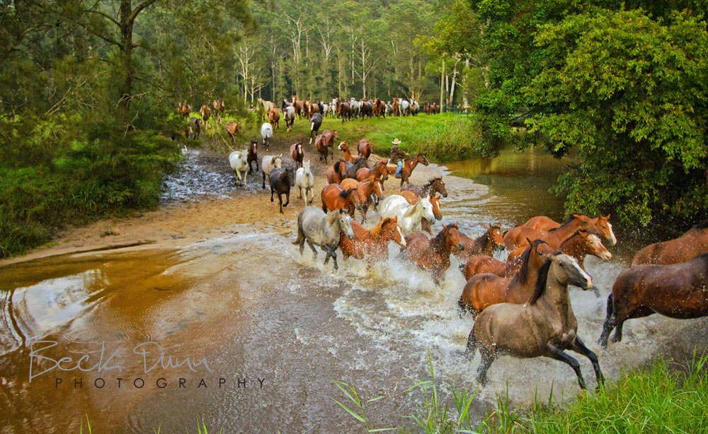 Horse Muster across stream at Glenworth Valley