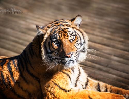 Wildlife Encounters at Mogo Zoo